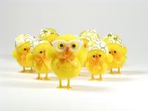 Familia del pollo de Pascua Imagen de archivo