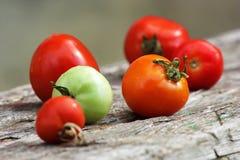 Familia del tomate Foto de archivo libre de regalías