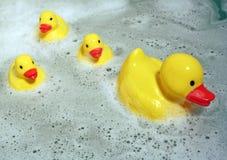 Familia Ducky de goma Foto de archivo libre de regalías