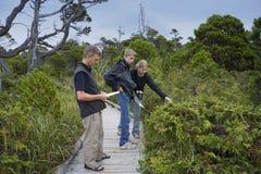 Familia en paseo marítimo que estudia las plantas en un pantano Fotos de archivo libres de regalías
