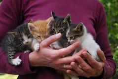 Familia encantadora del gatito Imagen de archivo libre de regalías