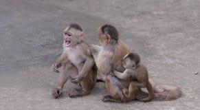 Familia feliz (en el concepto del mono) Foto de archivo