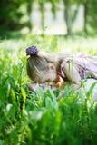 Familia feliz Mime y la mentira en una hierba, abrazo de la hija adentro fotos de archivo