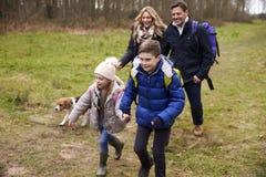 Familia feliz que camina en el campo con su perro Imagen de archivo libre de regalías