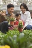 Familia feliz que planta las flores en el jardín Imagen de archivo libre de regalías