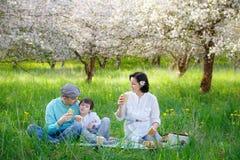 Familia joven que merienda en el campo en jardín floreciente de la manzana fotografía de archivo
