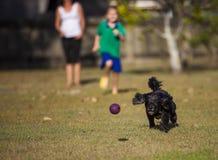 Familia que juega con el perro Fotos de archivo