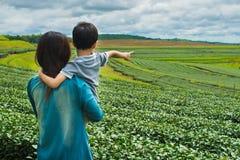 Familia que mira el campo de la plantación de té Fotografía de archivo libre de regalías