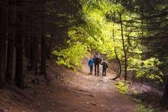 Familia que recorre en bosque Imagen de archivo libre de regalías