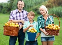 Familia sonriente feliz con las manzanas Imagenes de archivo