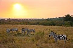 Familia y puesta del sol de la cebra Imágenes de archivo libres de regalías