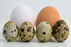 Familial love. Egg family Stock Photos