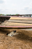 Familiar dog on Don Det. Familiar dog hiding under wooden boat on Don Det island in south Laos. Life on four thousands islands Si Phan Don on Mekhong river in stock image