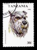 Familiaris di canis lupus dello schnauzer miniatura, serie dei cani, circa 1993 Immagini Stock