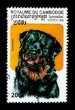 Familiaris di canis lupus di Rottweiler, serie dei cani, circa 1998 Immagini Stock