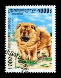 Familiaris di lupus di Chow-Chow Canis, serie dei cani, circa 1997 Fotografia Stock Libera da Diritti