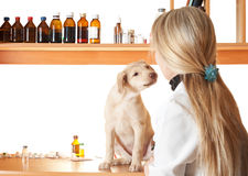 Familiarity puppy and vet Stock Photo
