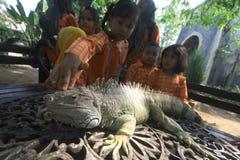 Familiarización con los reptiles de los animales Imágenes de archivo libres de regalías