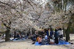 Familias que recolectan para el hanami en un parque en Japón imágenes de archivo libres de regalías