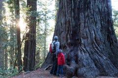 Familie in Californische sequoia'sbos stock afbeeldingen