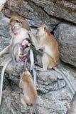 Familie der Affen Stockbilder