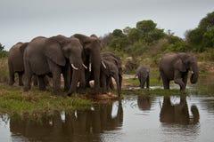 Familie der Elefanten stockfotos