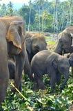 Familie der Elefanten Lizenzfreies Stockfoto