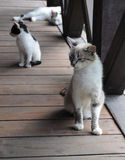 Familie der Katzen Stockfotos