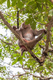 Familie des Affen auf Kho schellte Standpunkt Stockbilder