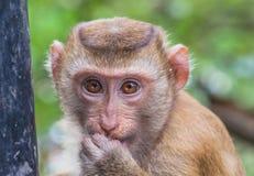 Familie des Affen auf Kho schellte Standpunkt Lizenzfreie Stockfotografie