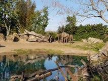 Familie des afrikanischen Elefanten durch Wasserstelle Stockbilder