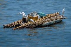 Familie des Reihers auf einer Bootsfahrt Lizenzfreie Stockfotografie