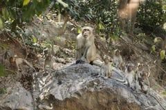Familie des thailändischen Affen Lizenzfreie Stockfotografie
