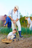Familie die aardappels in moestuin planten Royalty-vrije Stock Foto