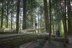 Familie, die auf gefallenen Bäumen balanciert Lizenzfreie Stockfotos