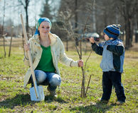 Familie, die Baum pflanzt Lizenzfreies Stockbild