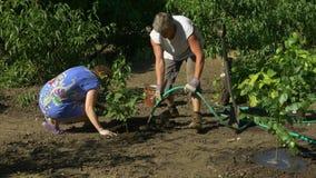 Familie die berkbomen in tuin planten Perziken, wijnstok en bloemen op achtergrond stock videobeelden