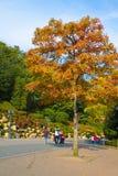 Familie die in de herfstpark wandelen Royalty-vrije Stock Afbeeldingen