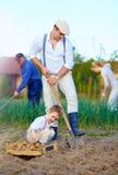 Familie, die Kartoffeln im Gemüsegarten pflanzt Lizenzfreies Stockfoto