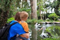 Familie, die Pelikane betrachtet stockfotografie