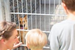 Familie, die schaut, um ein Haustier vom Tierheim anzunehmen lizenzfreies stockfoto