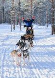 Familie die schor ar in Lapland berijden bij de winter Fins bos stock fotografie