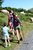 Familie die sheeps op gebieden letten op Royalty-vrije Stock Afbeeldingen
