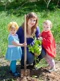 Familie die spruiten plant stock afbeelding