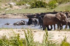 Familie die van olifanten in de rivier spelen stock afbeelding