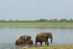Familie die van olifanten rivierdoorwaadbare plaats overgaan Stock Fotografie