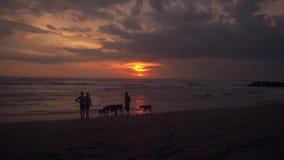 Familie en hondenspel op strand bij zonsondergang