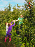 Familie het plukken appelen in een boomgaard royalty-vrije stock afbeeldingen