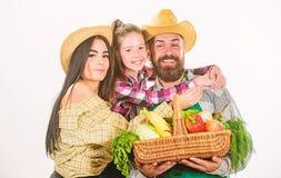 Familie het tuinieren De ouders en de dochterlandbouwers vieren oogstvakantie Het concept van het familielandbouwbedrijf De famil royalty-vrije stock fotografie