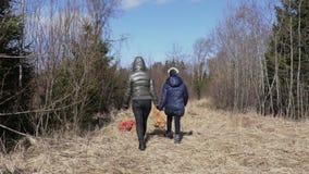 Familie holen Kartoffeln im Wald für Fütterungstiere der wild lebenden Tiere wilden Eber und Rotwild stock video footage